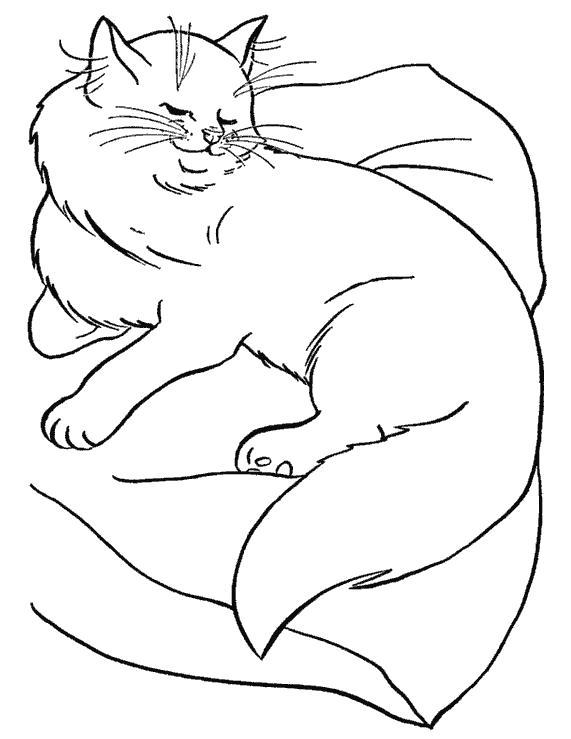 Раскраска  красивые кошки. Скачать кошка.  Распечатать Домашние животные