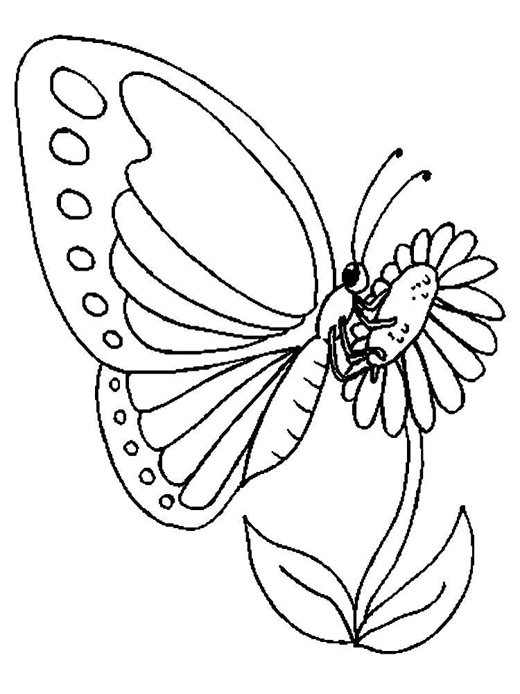 Раскраска бабочка на цветке. Скачать Бабочки.  Распечатать Бабочки
