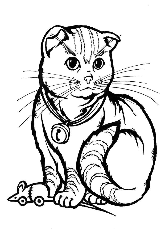 Раскраска Рисунок кошки для . Скачать кошка.  Распечатать Домашние животные