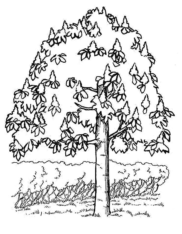 Раскраска Детские  для девочек и мальчиков. дерево возле кустарников . Скачать дерево.  Распечатать Контуры дервеьев
