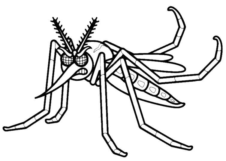 Раскраска злой комар. Скачать Комар.  Распечатать Насекомые