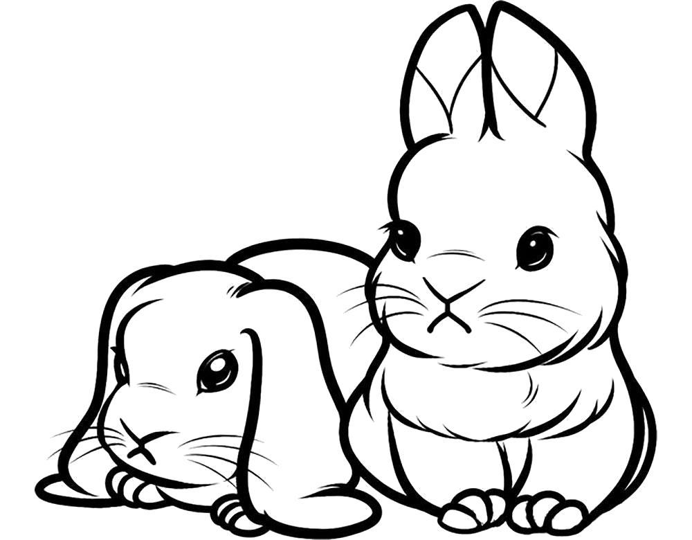 Раскраска  кролики, милые кролики. Скачать Кролик.  Распечатать Кролик