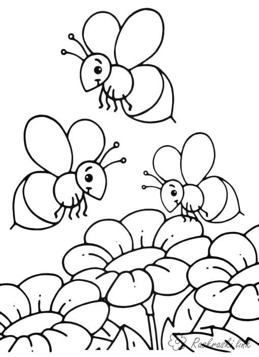 Раскраска  Насекомые Детские -картинки  . Пчелы собирают нектар. Скачать Пчела.  Распечатать Насекомые
