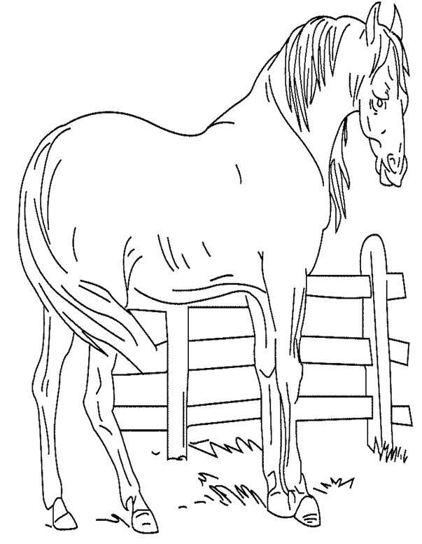 Раскраска конь на ферме. Скачать .  Распечатать