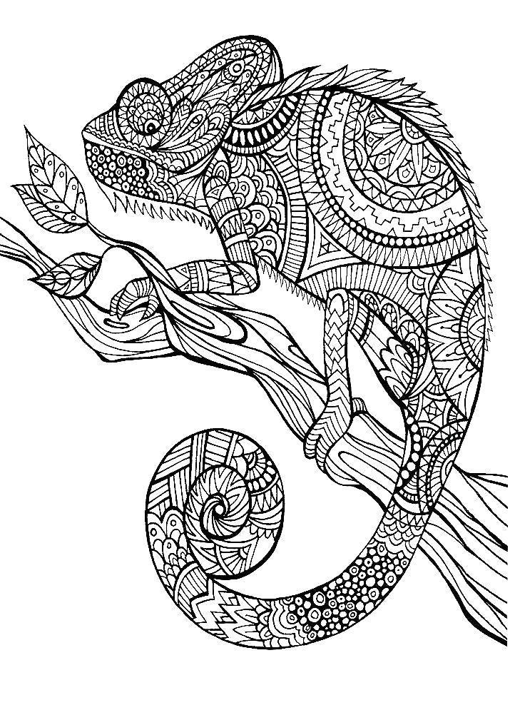 Раскраска Узорный хамелеон. Скачать .  Распечатать
