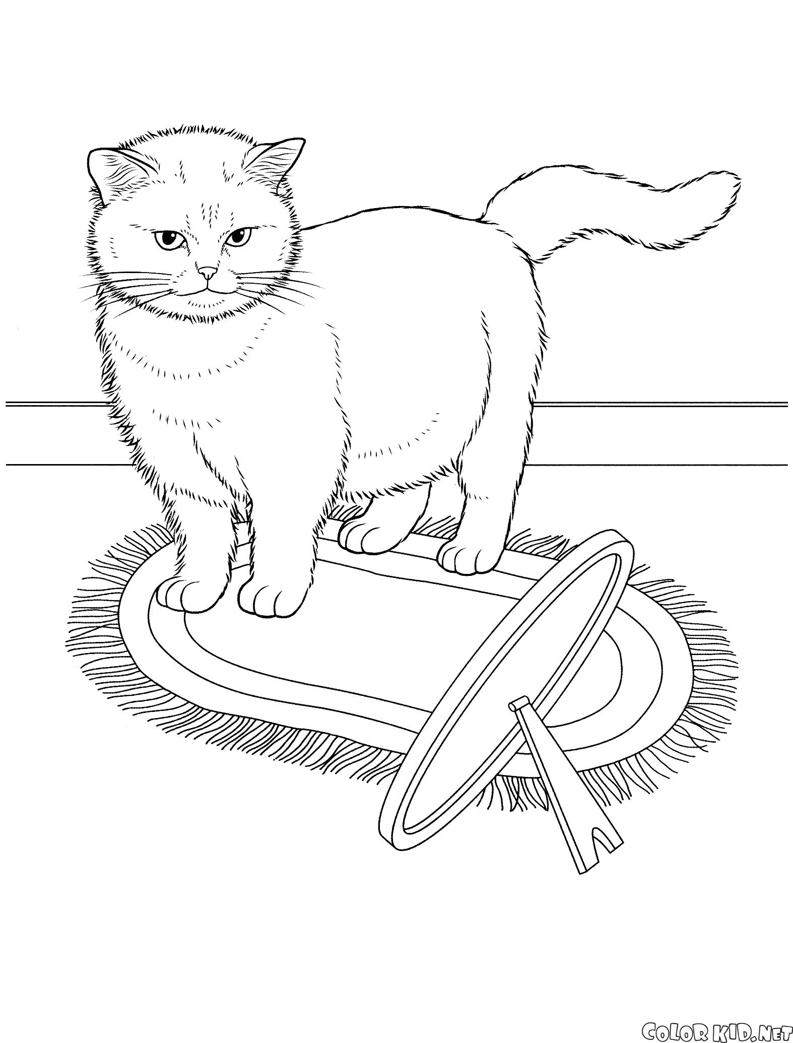 Раскраска Экзотическая кошка. Скачать кошка.  Распечатать кошка
