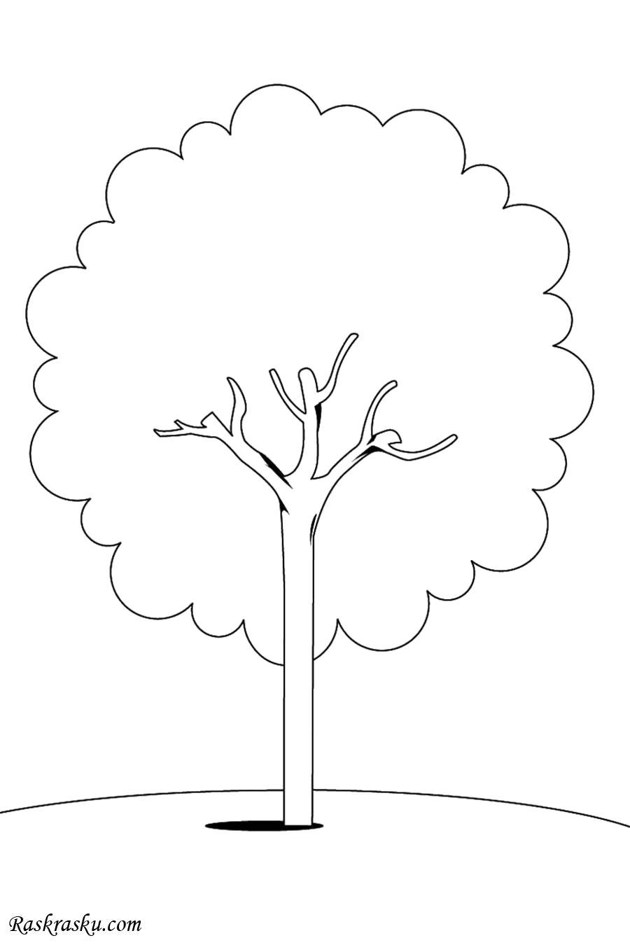 Раскраска Каштан. Скачать деревья.  Распечатать деревья