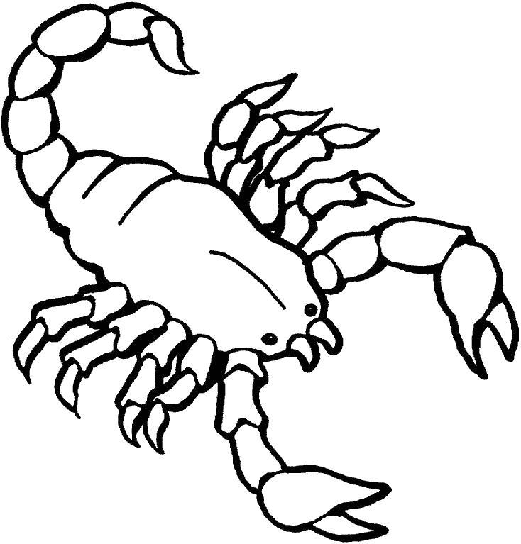 Раскраска Скорпион очень опасен. Скачать скорпион.  Распечатать скорпион