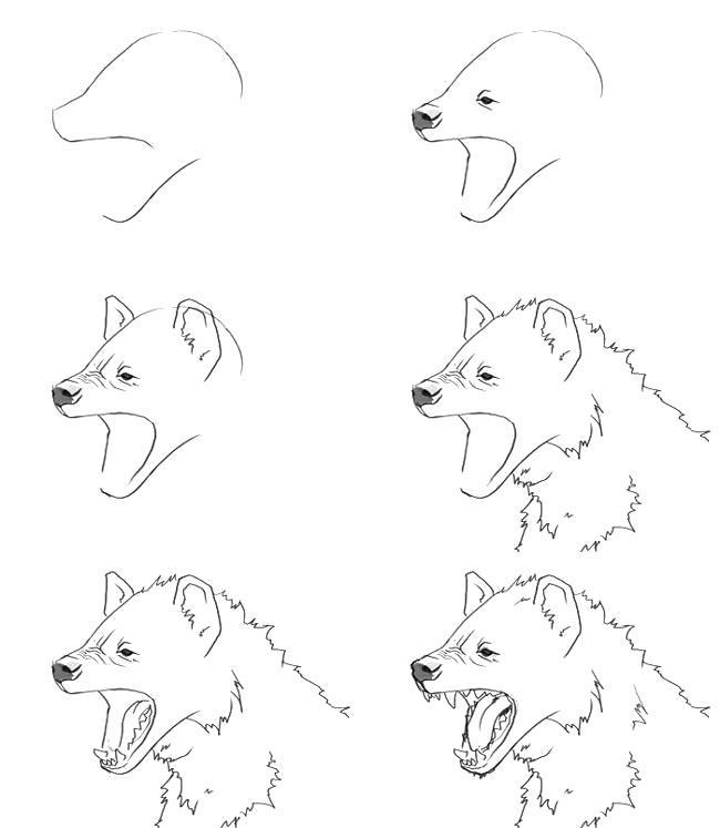 Раскраска Как нарисовать гиену карандашом . Скачать Как нарисовать.  Распечатать Как нарисовать