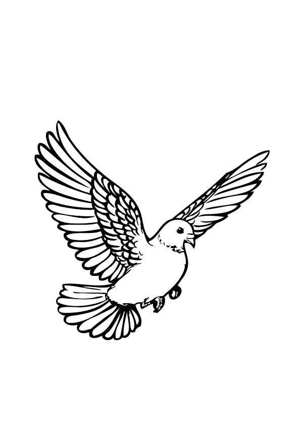 Раскраска  Голубь летит крыльями машет. Скачать Голубь.  Распечатать Голубь
