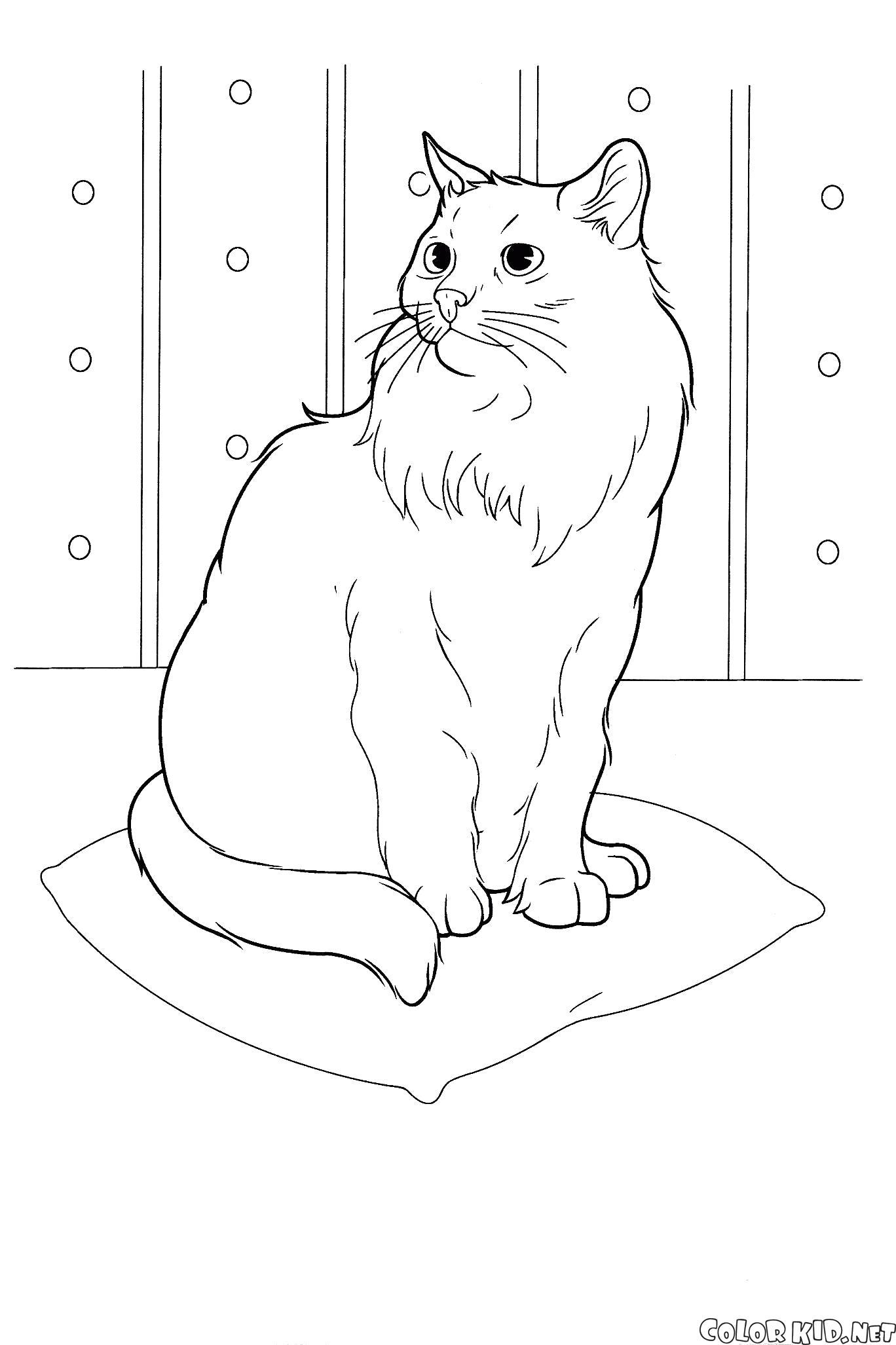 Раскраска кошка на подушке. Скачать кошка.  Распечатать кошка