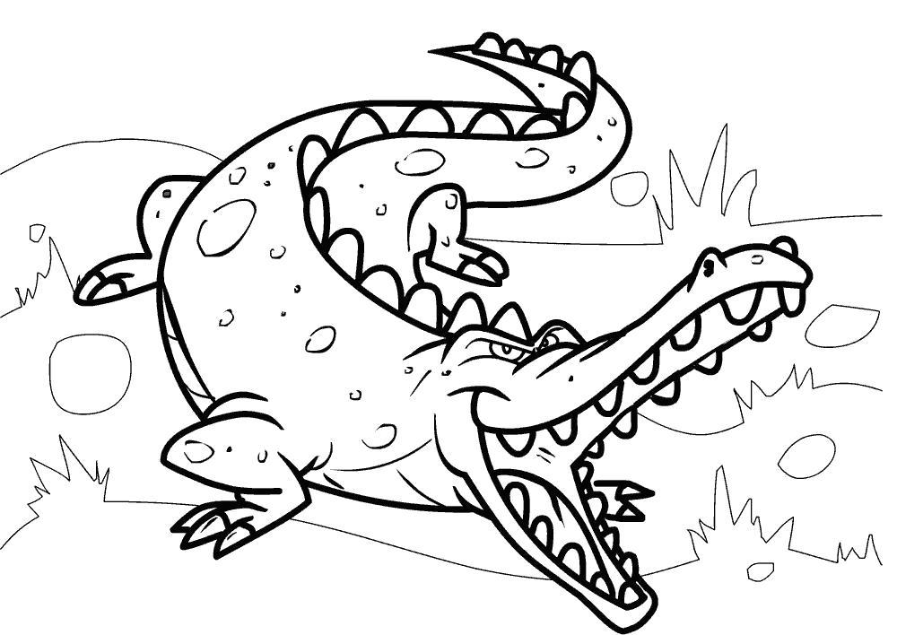 Раскраска Злой крокодил готов к нападению.. Скачать крокодил.  Распечатать Дикие животные