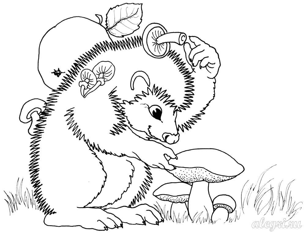Раскраска Ежик осенью.. Скачать Ежик.  Распечатать Дикие животные