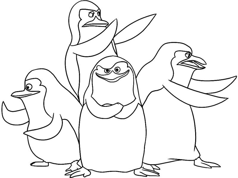Раскраска пингвины из мадагаскара. Скачать Для мальчиков.  Распечатать Для мальчиков