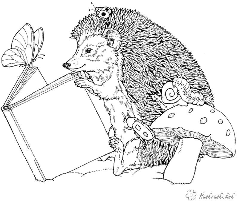Раскраска  ежик еж читает книгу на природе, лесные животные, грибы. Скачать Ежик.  Распечатать Дикие животные