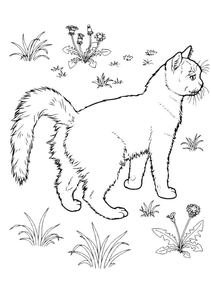 Раскраска  Удивленная кошка. Скачать кошка.  Распечатать кошка