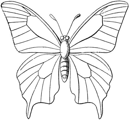 Раскраска бабочка с клыльями. Скачать Бабочки.  Распечатать Бабочки
