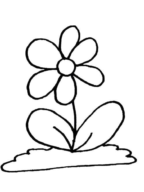 Раскраска  Большие листья, цветок . Скачать лист.  Распечатать лист