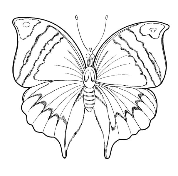Раскраска бабочка с узорами. Скачать Бабочки.  Распечатать Бабочки