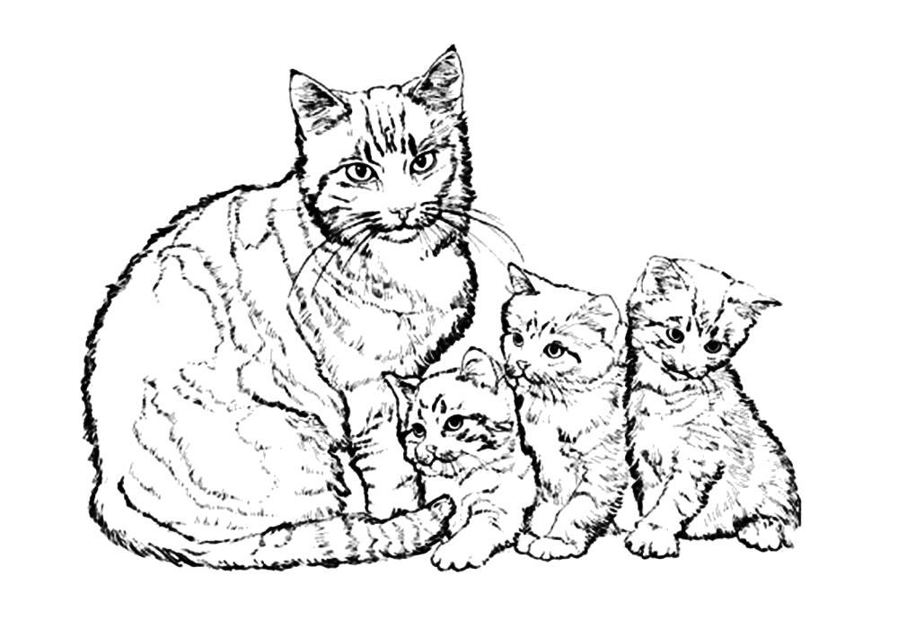 Раскраска  про кошек и котят. Скачать кошка, Котенок.  Распечатать Домашние животные