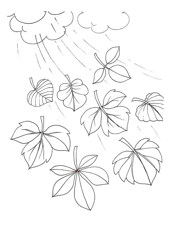 Раскраска Ветер гонит листья. Скачать листья.  Распечатать растения
