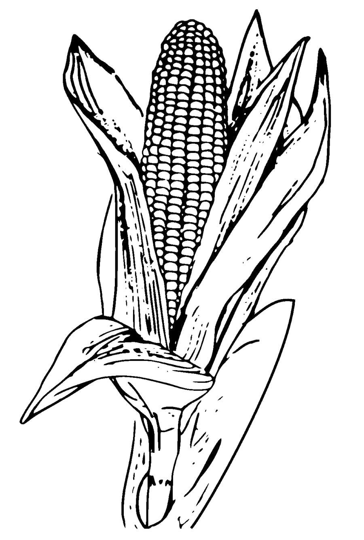 Раскраска Кукуруза большая . Скачать кукуруза.  Распечатать овощи
