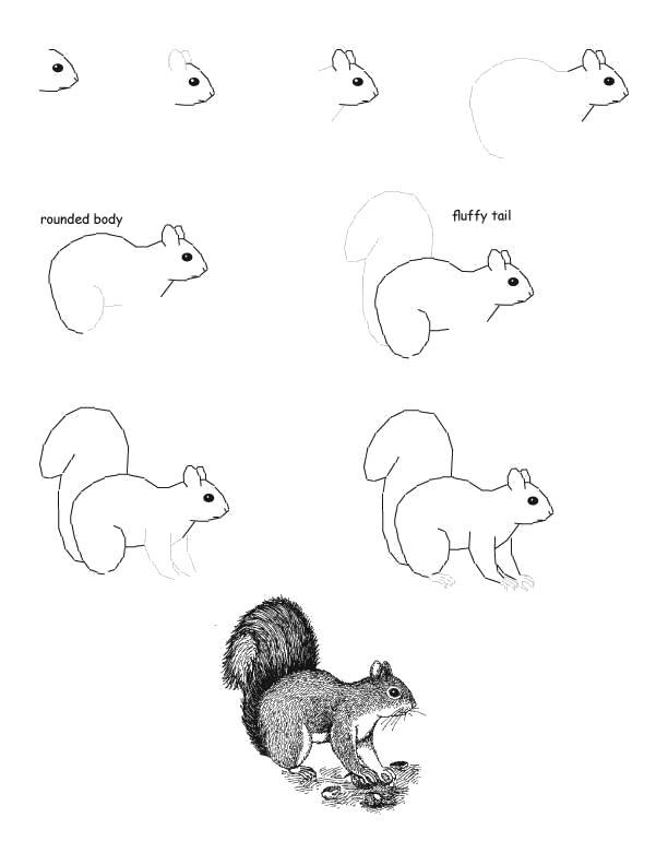Раскраска Как нарисовать белку . Скачать как нарисовать.  Распечатать Учимся рисовать
