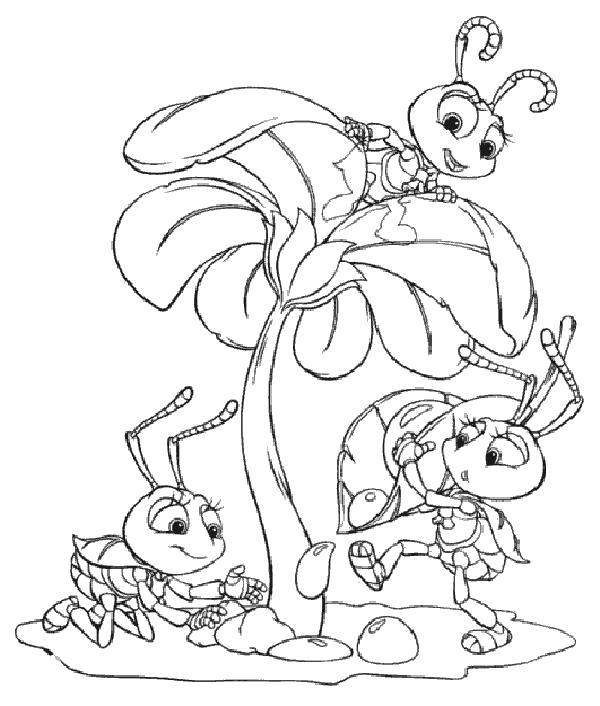 Раскраска  муровей, муравьи и цветок. Скачать .  Распечатать