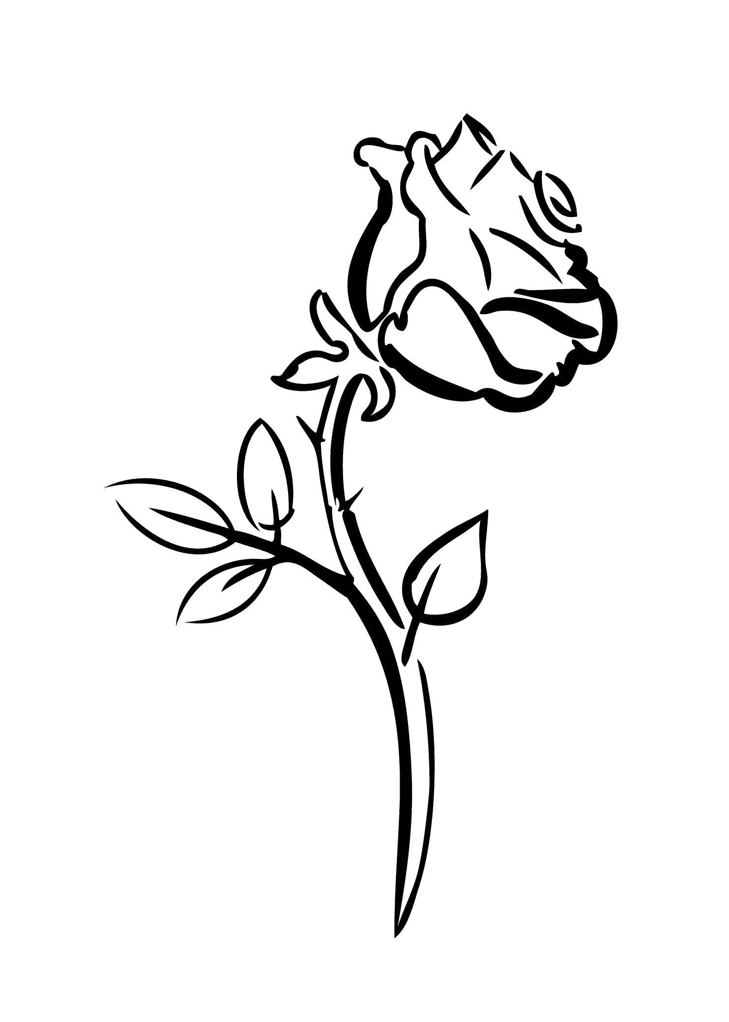 Раскраска Роза. Скачать Цветок.  Распечатать Цветок
