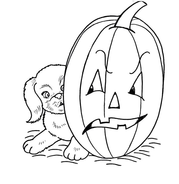 Раскраска Щенок с тыквой. Скачать Хэллоуин.  Распечатать Хэллоуин