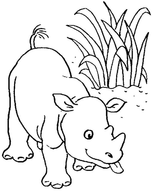 Раскраска игручий носорог. Скачать Носорог.  Распечатать Дикие животные