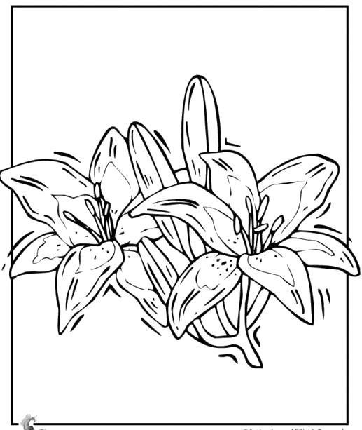Раскраска контурные рисунки цветов. Скачать Контур.  Распечатать Контур