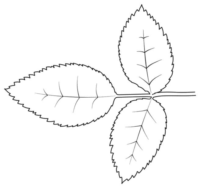 Раскраска листья для вырезания. Скачать Шаблон.  Распечатать Шаблон