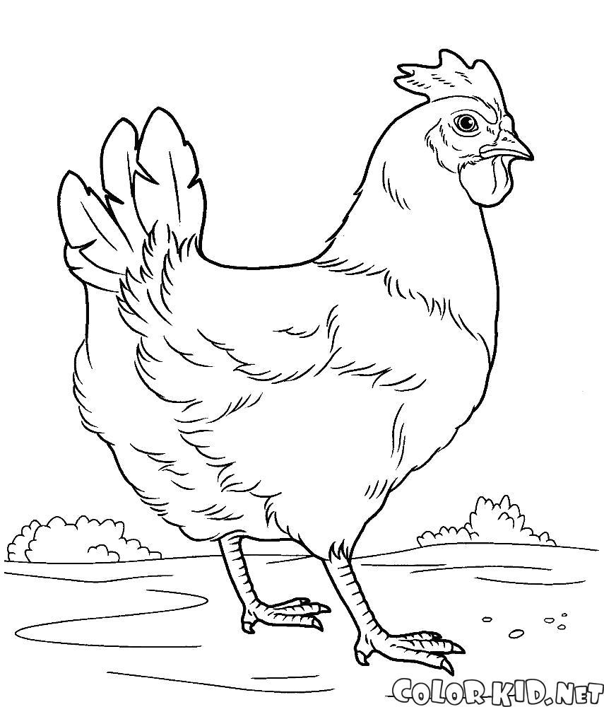 Раскраска Курица на лугу. Скачать Курица.  Распечатать Домашние животные
