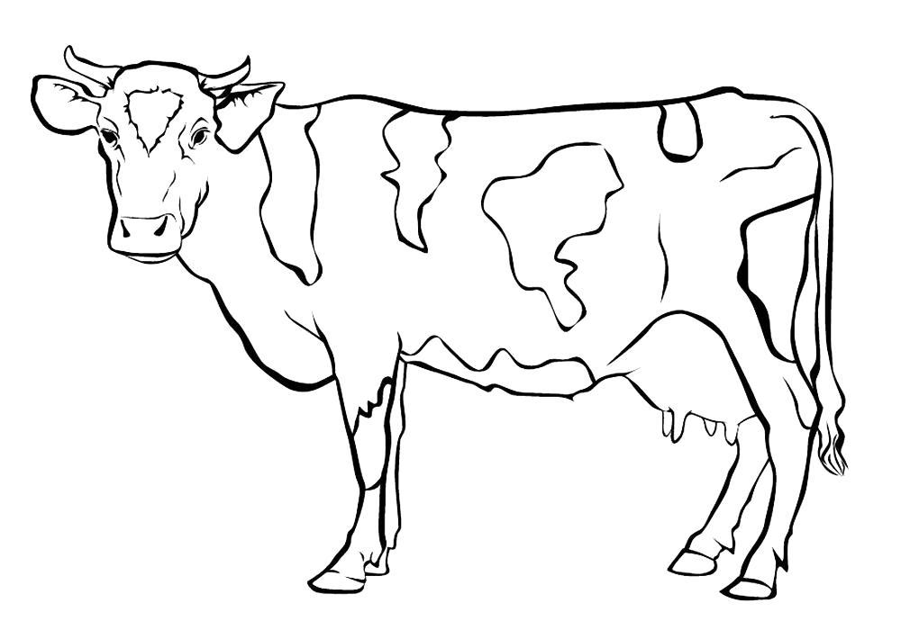 Раскраска Корова картинки для детей . Скачать Корова.  Распечатать Домашние животные