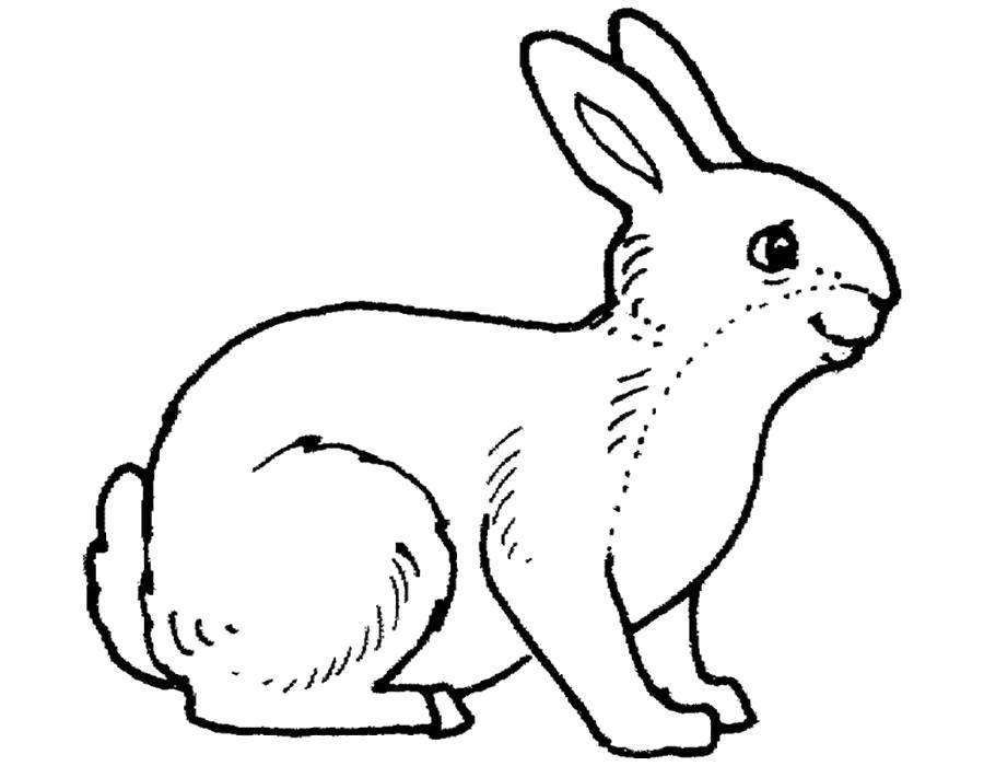 Раскраска  кролик, домашний кролик, маленький кролик, пушистый кролик. Скачать Кролик.  Распечатать Кролик
