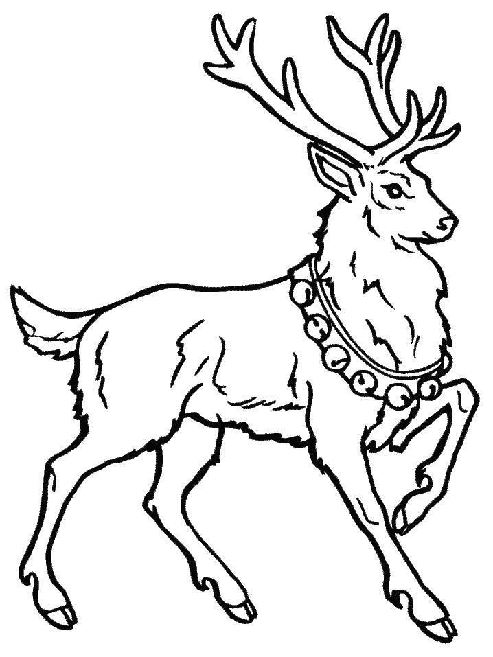 Название: Раскраска Гордый олень. Категория: . Теги: .