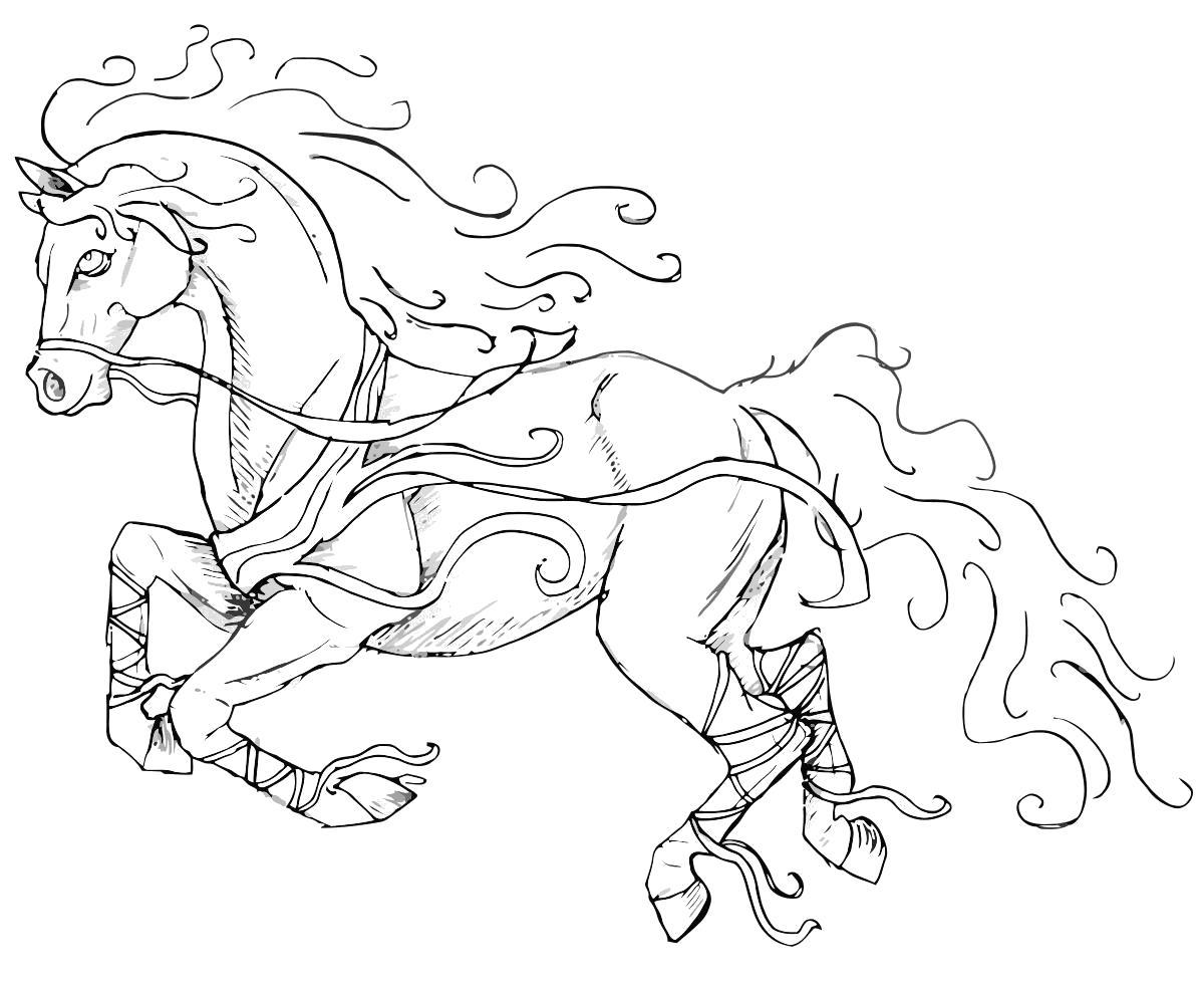 Раскраска Очень красивый конь. Скачать Лошади.  Распечатать Лошади