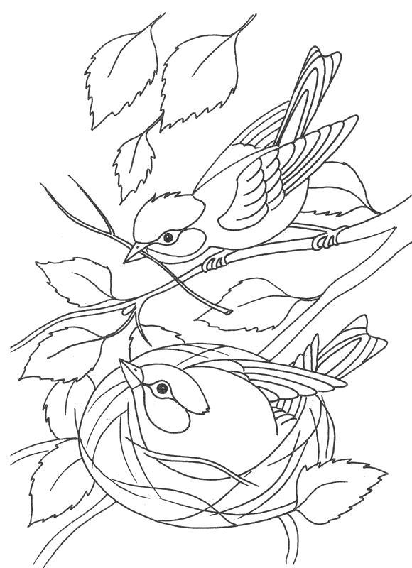 Раскраска птицы сидя на дереве, птица в домике, . Скачать Весна.  Распечатать Весна