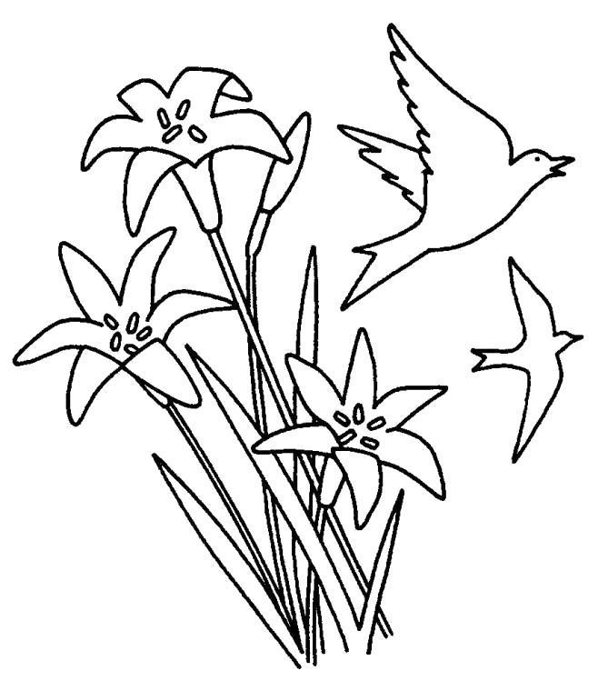 Раскраска Ласточка пролетает над лилиями. Скачать .  Распечатать