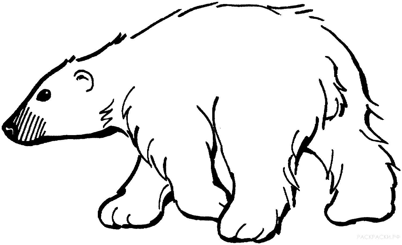 Раскраска Белый медведь идёт. Скачать медведь.  Распечатать медведь