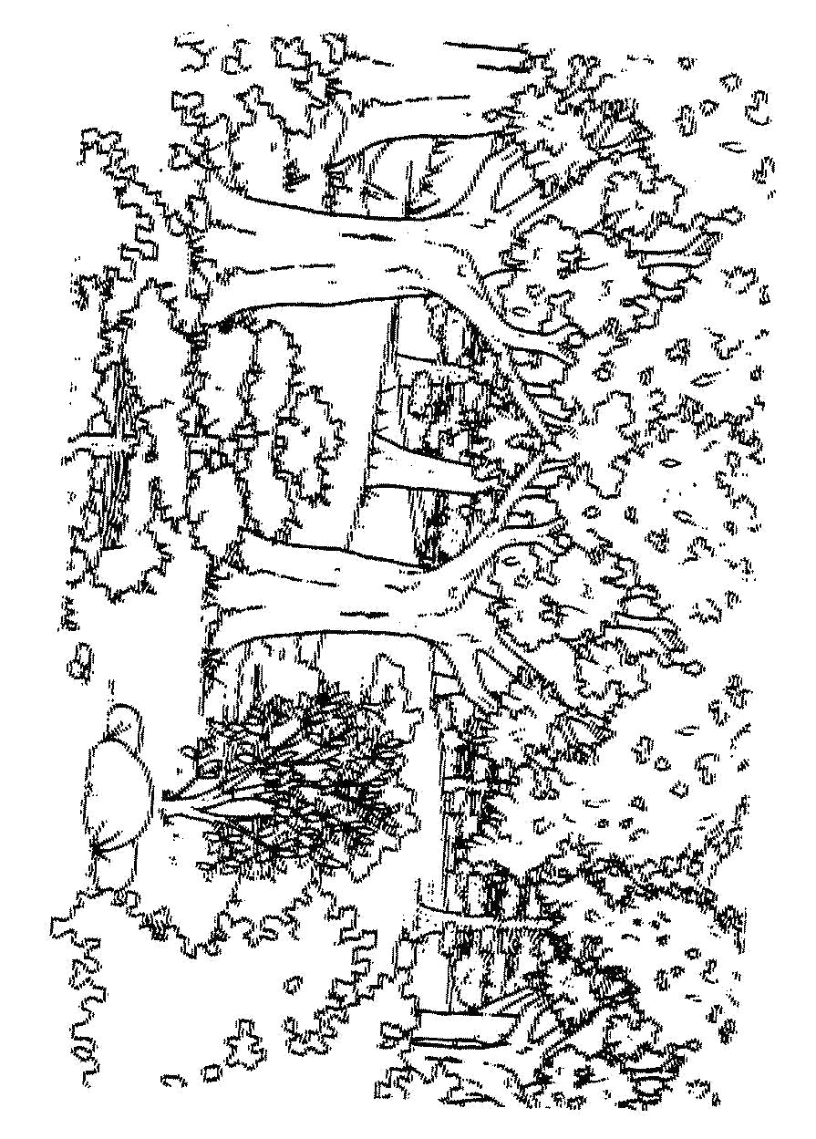 Раскраска  деревья: дуб, береза, клен, каштан, ива, сосна ... . Скачать клен.  Распечатать клен