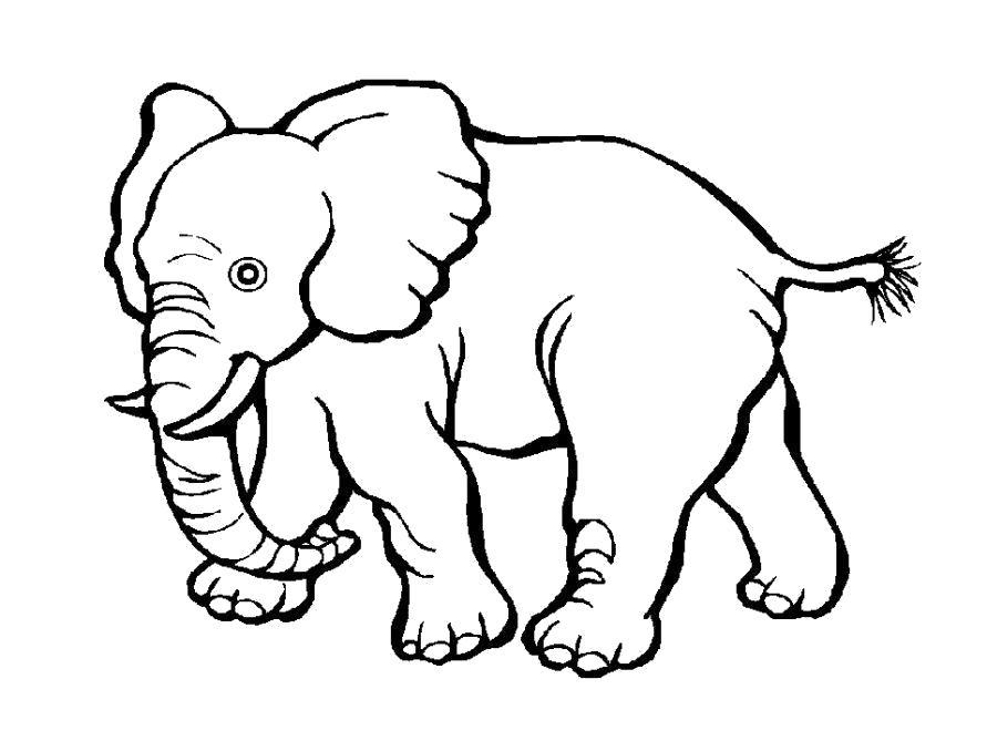 Раскраска  Слоненок. Скачать слон.  Распечатать Дикие животные