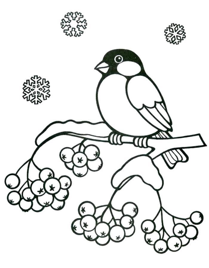 Раскраска  рябина зимняя и снегирь. Скачать рябина.  Распечатать ягоды