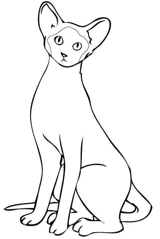 Раскраска черная кошка. Скачать кошка.  Распечатать Домашние животные