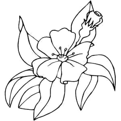 Раскраска  Цветок среди листвы. Скачать .  Распечатать