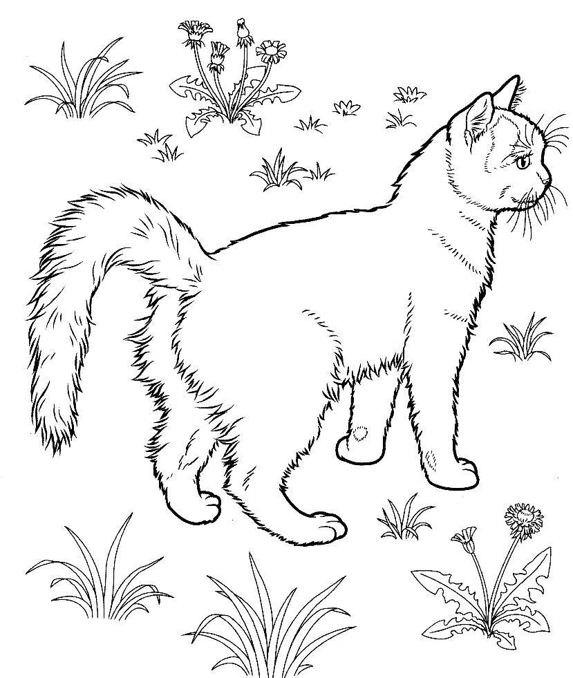 Раскраска Прогулка кошки. Скачать кошка.  Распечатать Домашние животные