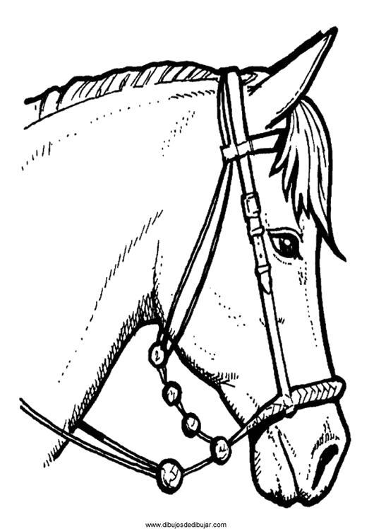 Раскраска лошадь. Скачать Лошадь.  Распечатать Домашние животные