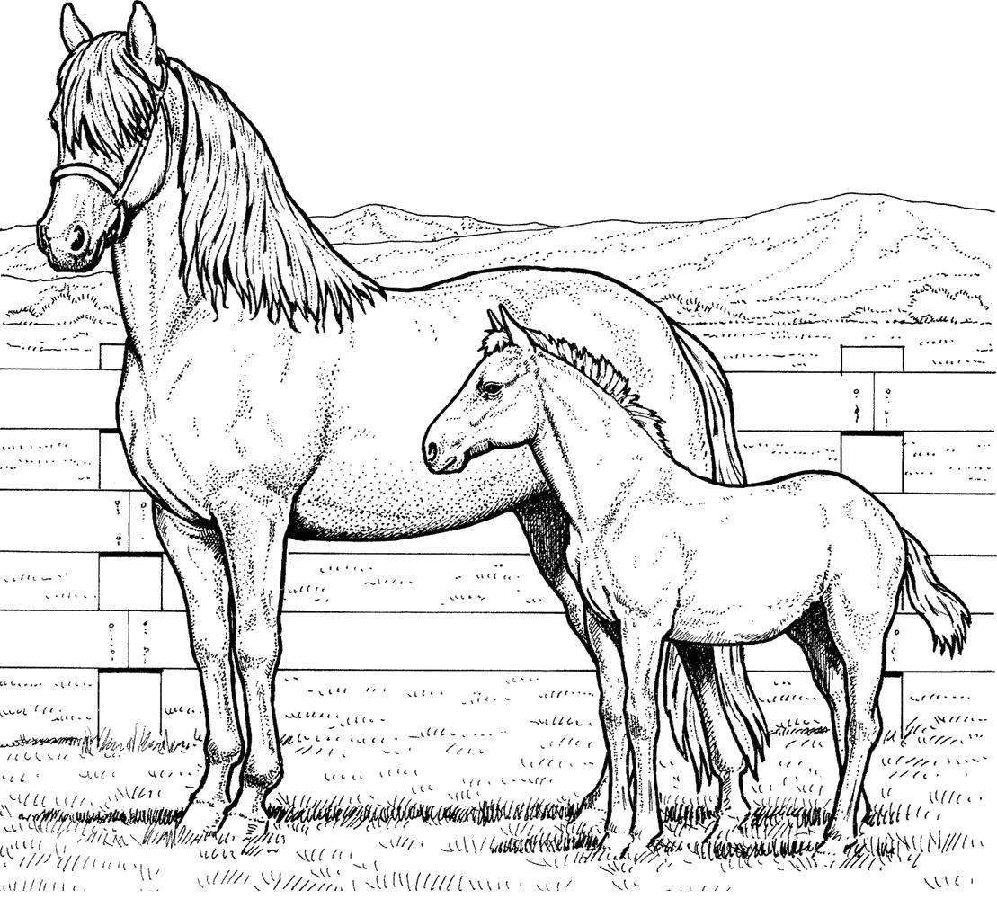 Раскраска  лошадь с жеребёнком. Скачать Лошадь.  Распечатать Домашние животные