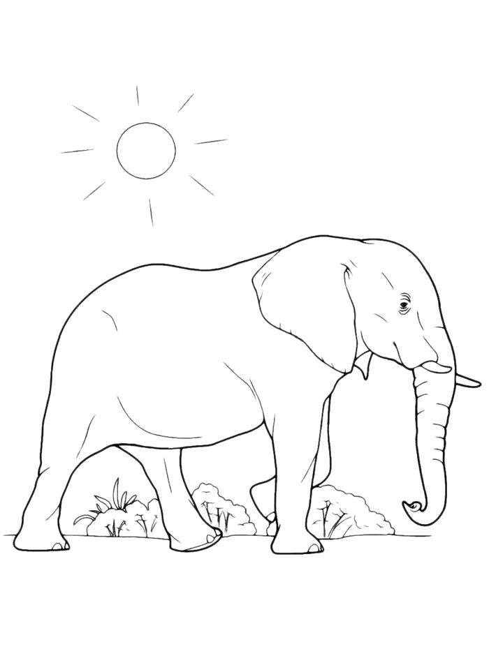 Раскраска  Под солнцем. Скачать слон.  Распечатать слон